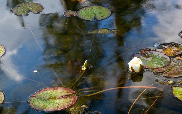 Фото № 8391 водоем  Загородный дом