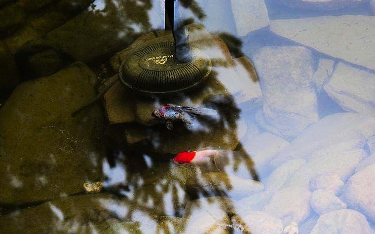 ландшафт водоема - фото № 12968