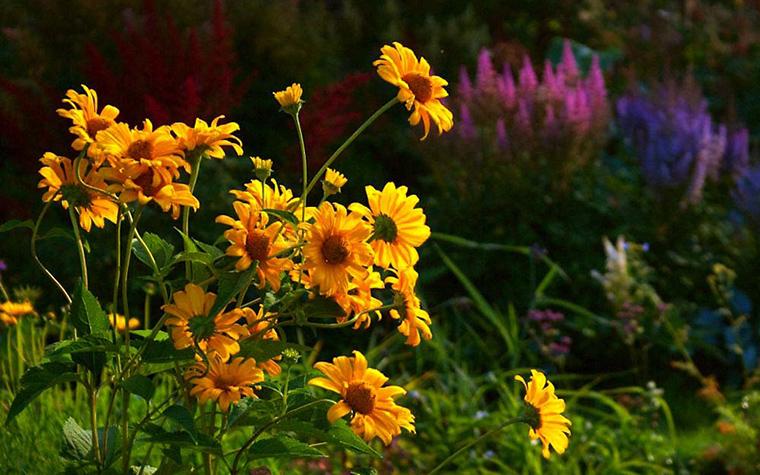 Загородный дом. цветник из проекта , фото №13454