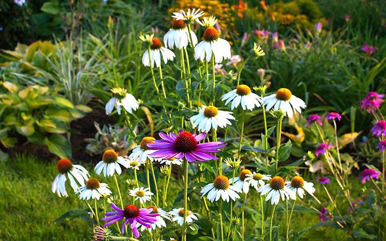 Загородный дом. цветник из проекта , фото №13455