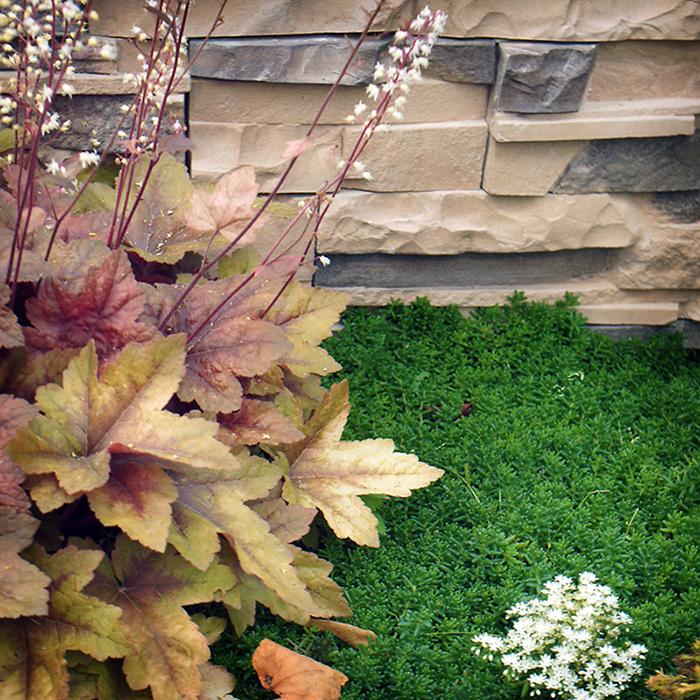 Загородный дом. цветник из проекта , фото №34545