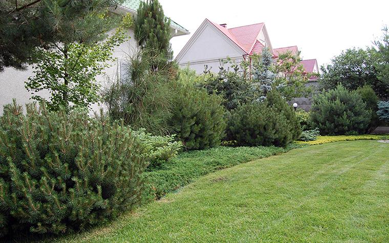 сады - фото № 38589