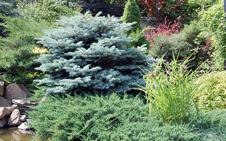 сады - фото № 38594