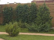 Загородный дом «», ограда забор . Фото № 2914