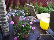 Загородный дом «Гостевой дом с бассейном», терраса  . Фото № 26877, автор Чащина Оксана