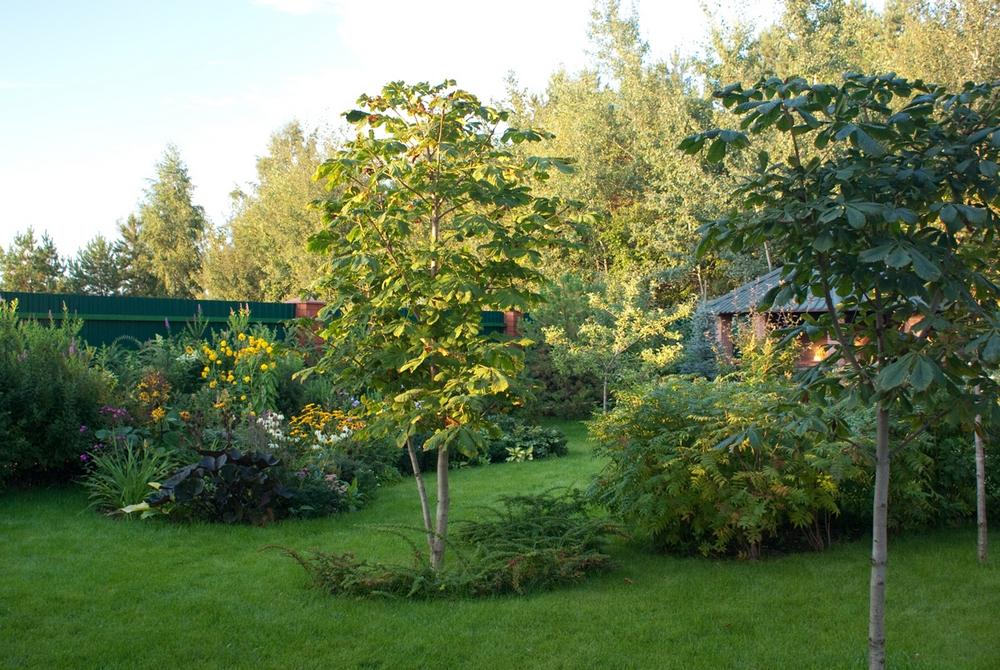 Загородный дом «», участок, фото из проекта