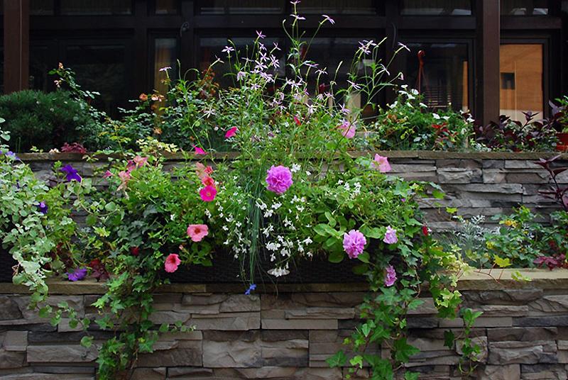 Фото цветник Загородный дом