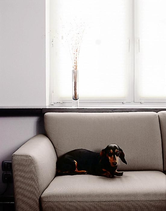 Квартира. гостиная из проекта , фото №1855