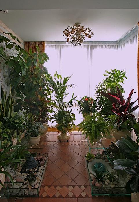 Фото зимний сад Квартира