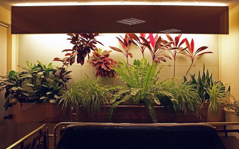 Фото № 10306 зимний сад  Дизайн офиса
