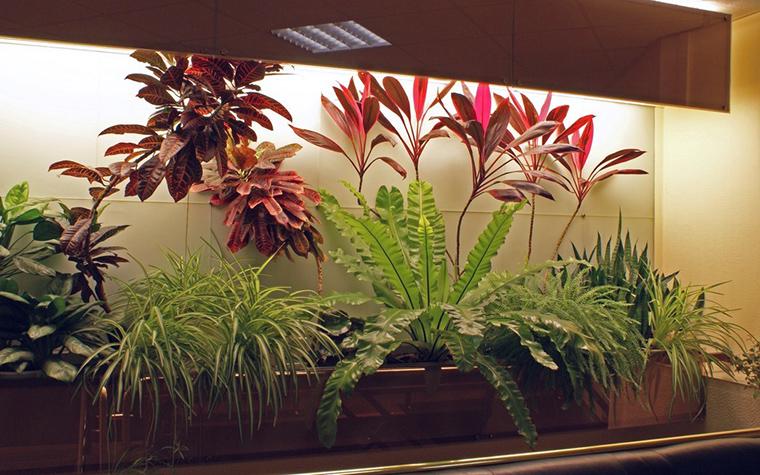 Фото № 10307 зимний сад  Дизайн офиса