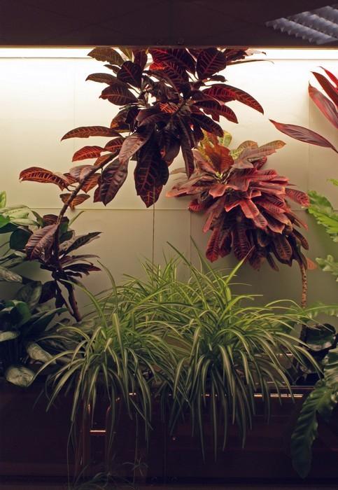 Фото № 10308 зимний сад  Дизайн офиса