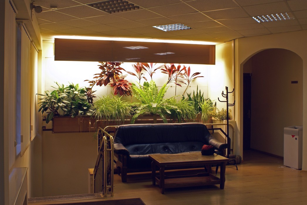 Дизайн офиса «», зимний сад, фото из проекта